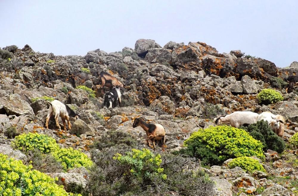 Подъем на Pico de la Zarza