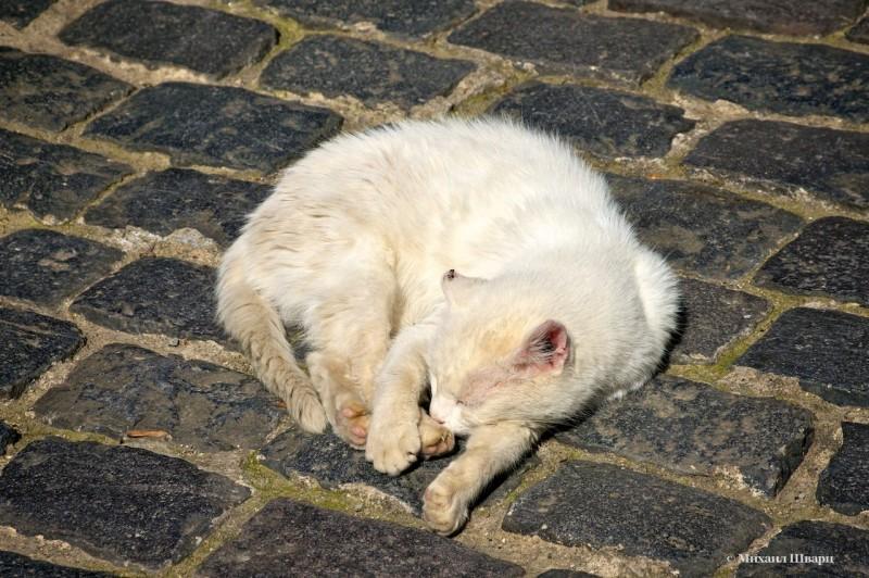 Котика-грязнулю