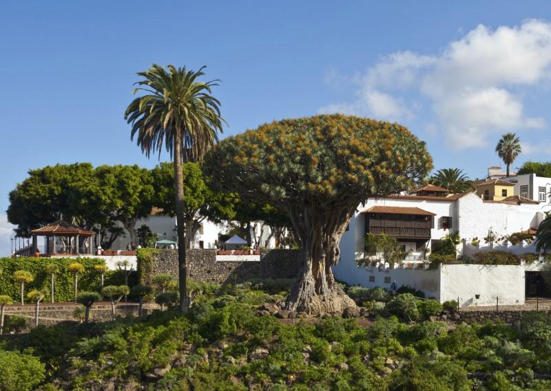 Драконово дерево в Парке Дель-Драго