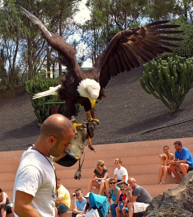 Шоу с хищными птицами