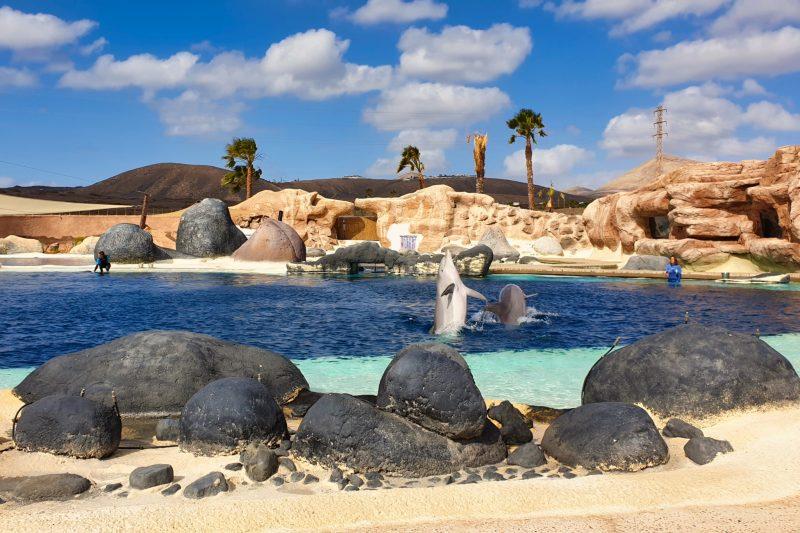 Шоу с дельфинами (Фото Rafal Szymczyk)
