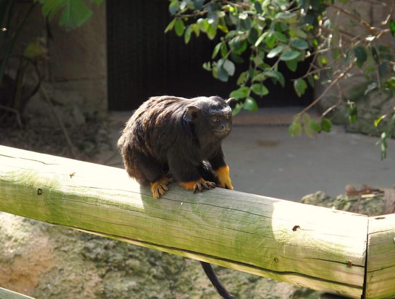 Один из обитателей зоопарка