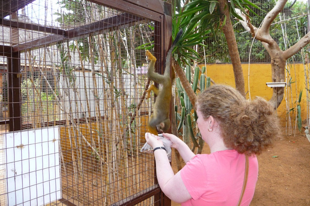 Общение с обезьянками (фото: alljengi)