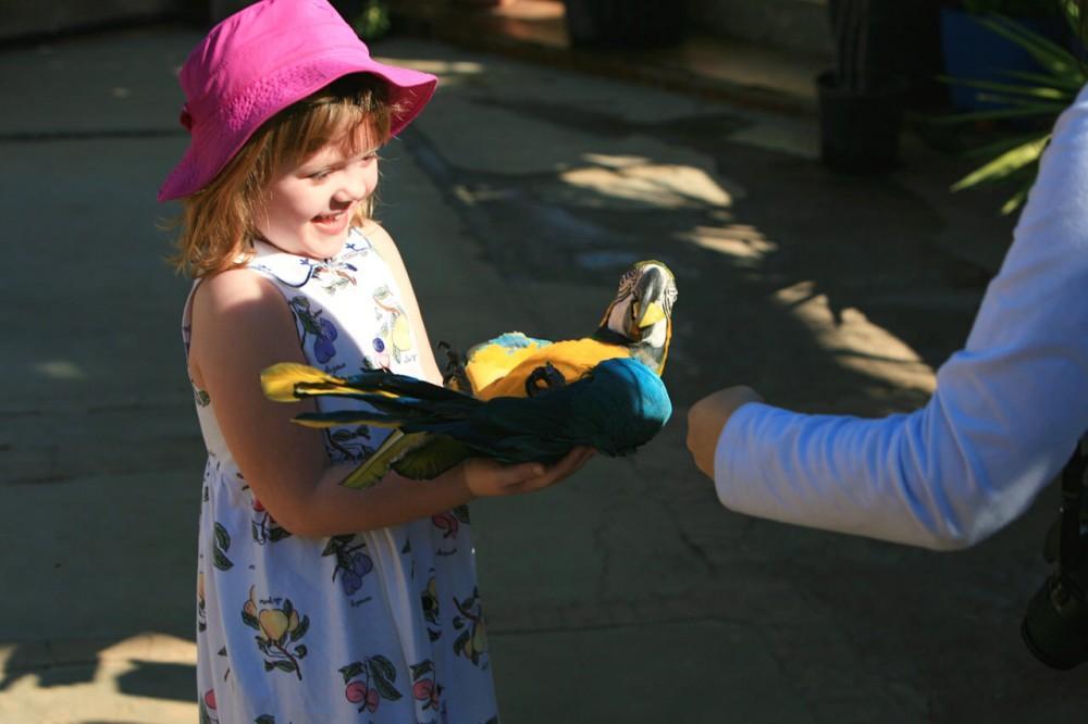 Попугай Ара (фото: Chris Morgan)
