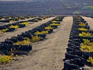 Виноградники и винодельни Ла Херия