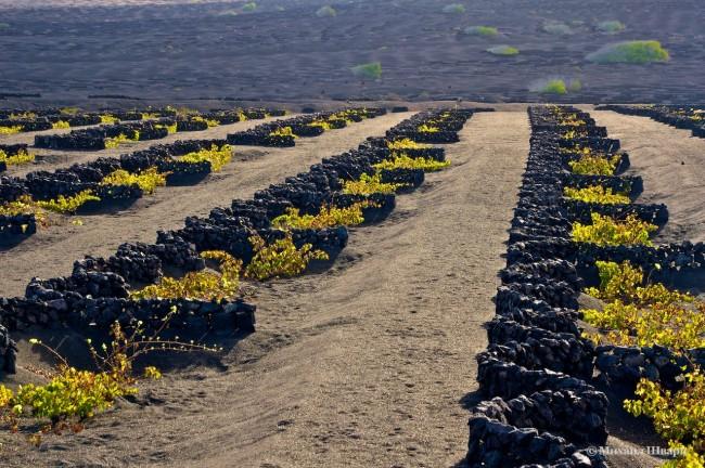 Виноградники La Geria