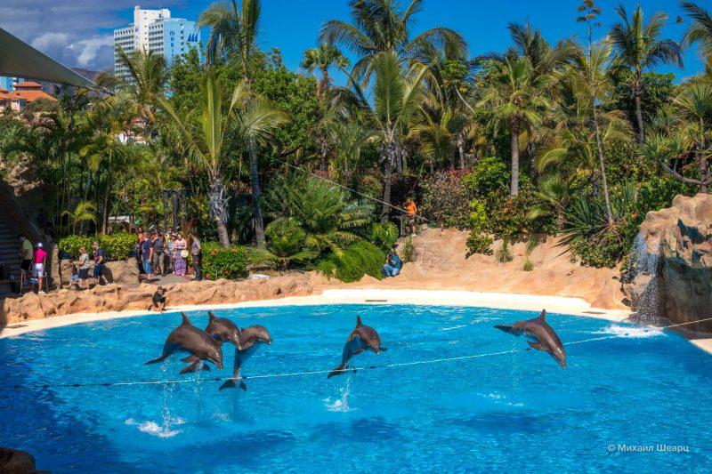 Шоу дельфинов в Лоро Парке