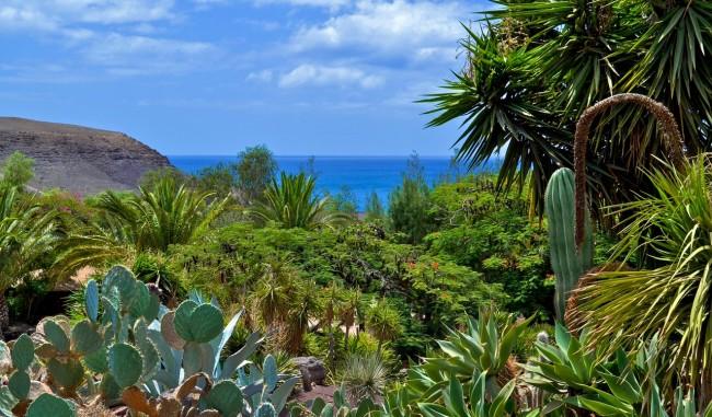 Оазис парк на острове Фуэртевентура