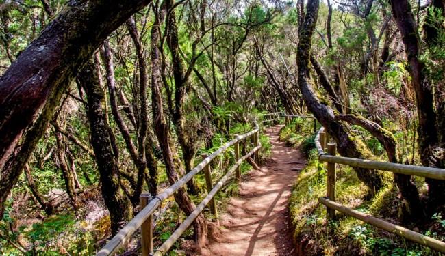 Parque nacional de Garajonay на острова Ла Гомера