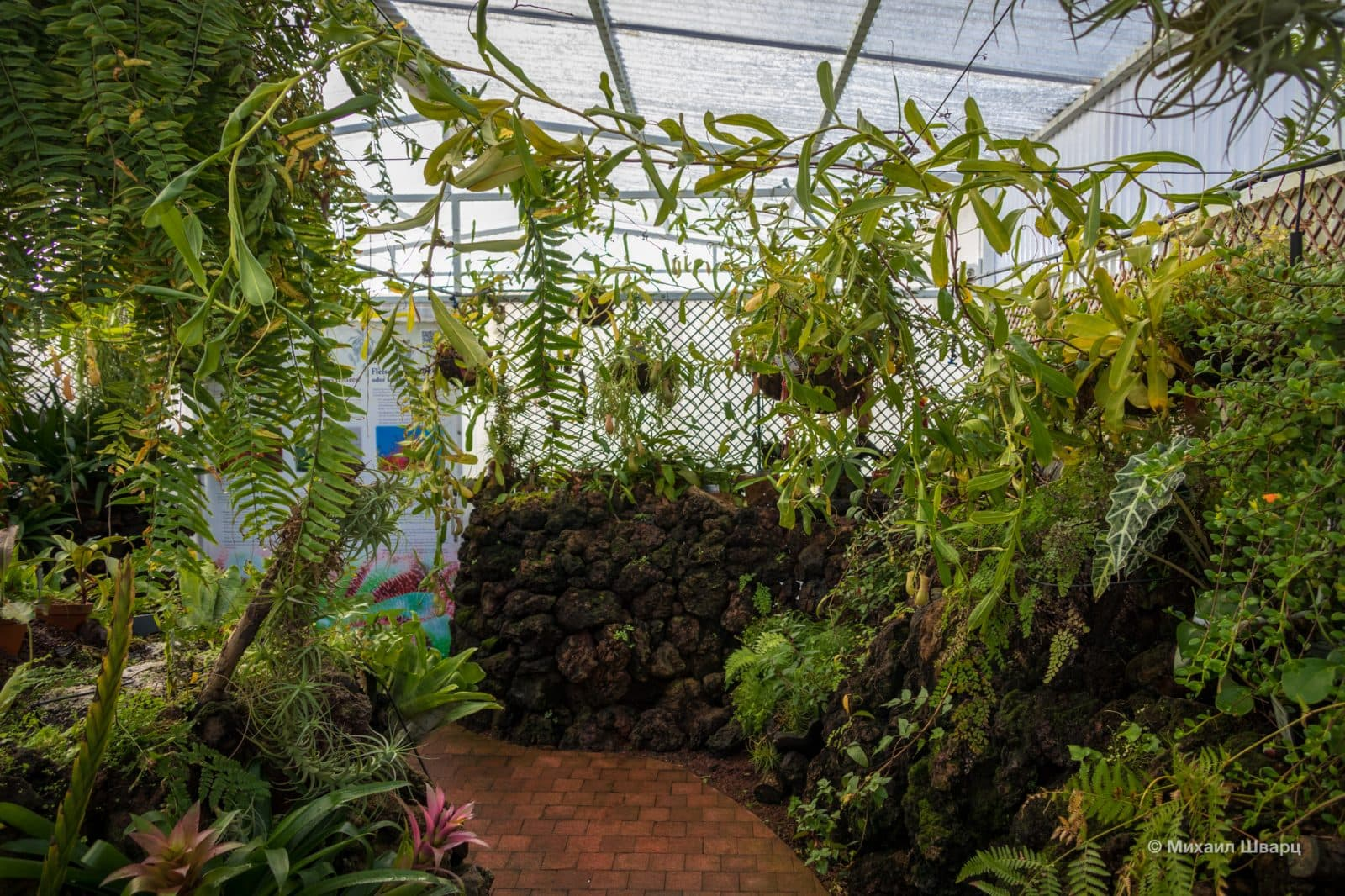 Хищные растения и орхидеи в павильоне Tropicarium
