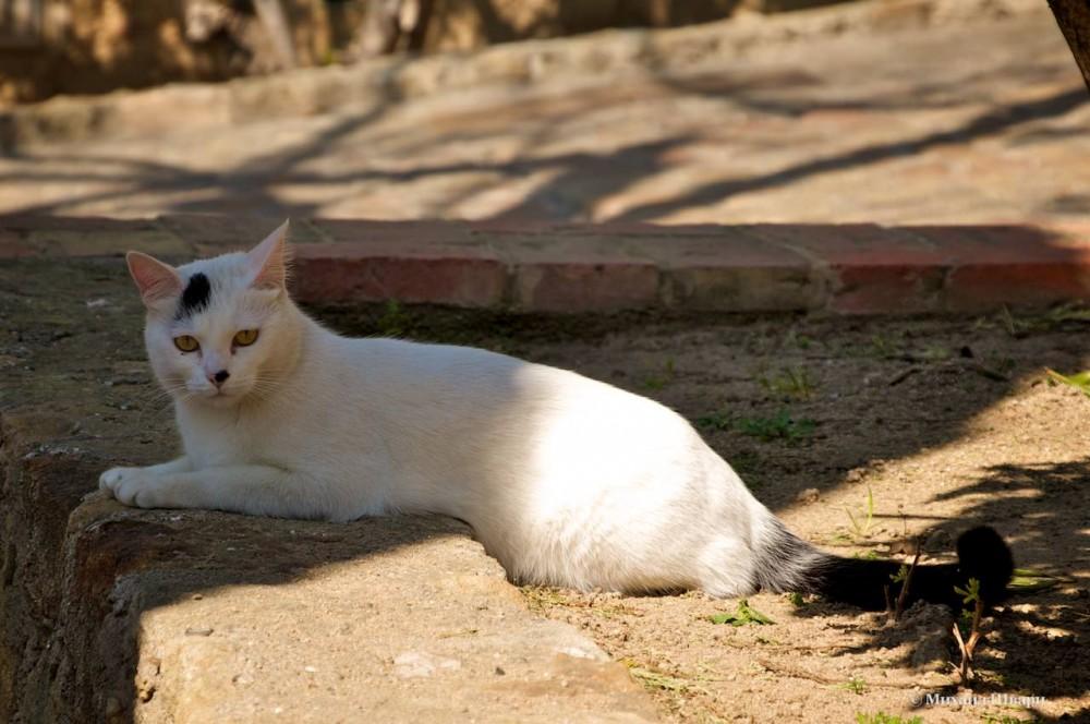 Котик для привлечения внимания
