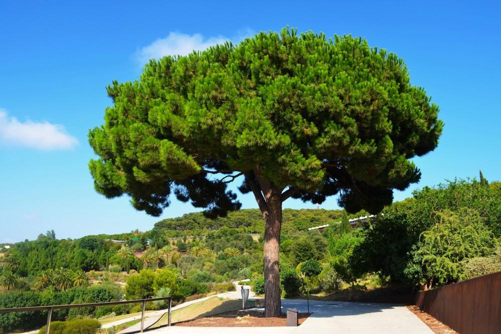 Ботанический сад Барселоны (фото: Bijan Yazdanian)