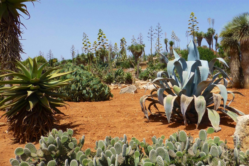Сад кактусов (фото: Jörg Rausch)