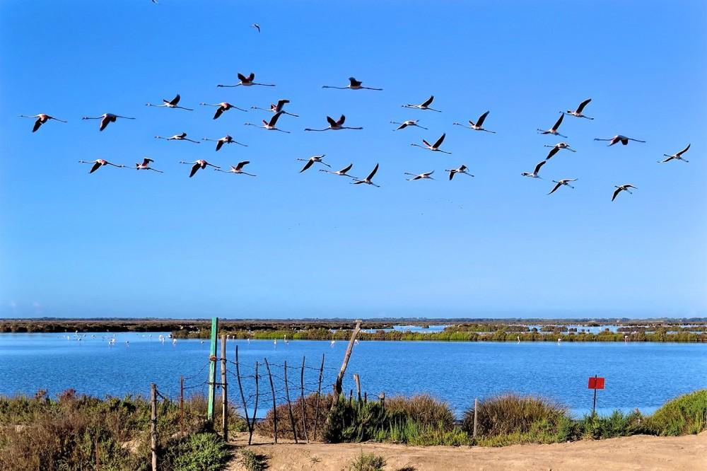 Национальный и природный парк Доньяна (фото: Lola Cortés)