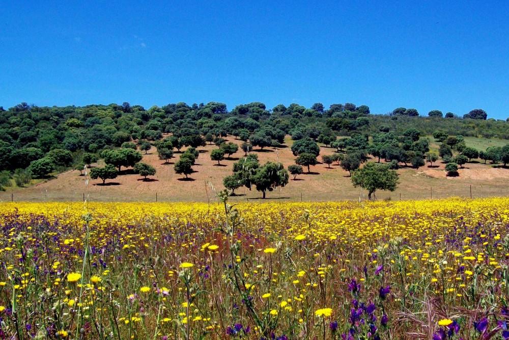 Национальный парк Кабаньерос (фото: Dalia Vazquez)