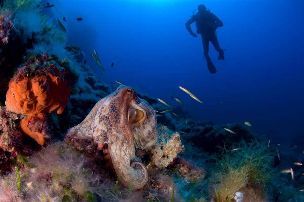 Подводные богатства (фото: Oceana in Europe)