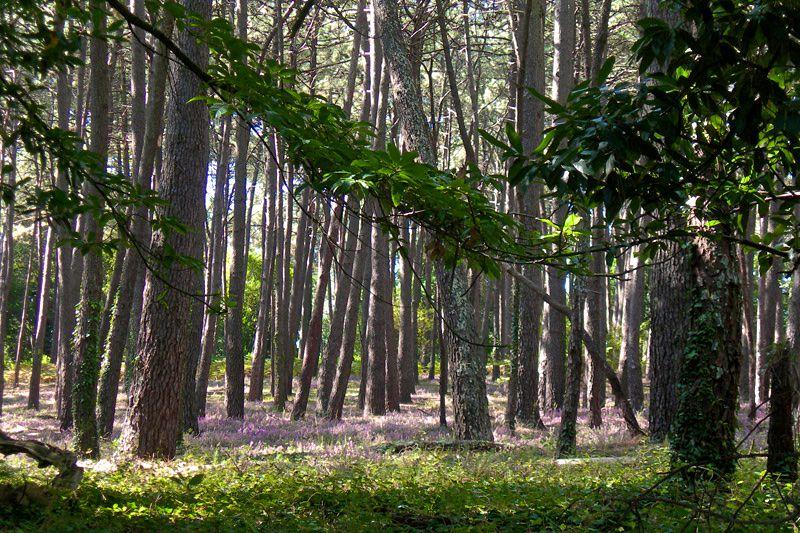 Лес на острове Кортегада (фото: Carmen)
