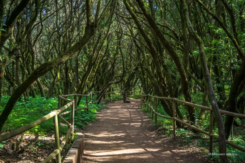 Влажный лавровый лес острова Ла Гомера