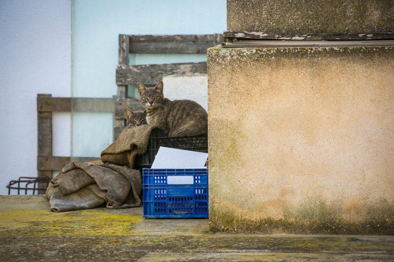 Котики нашего соседа
