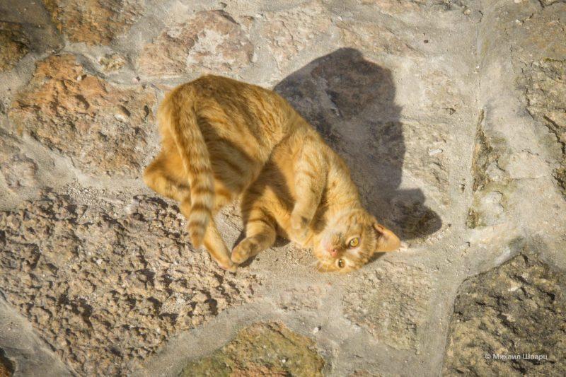 Котосчастье