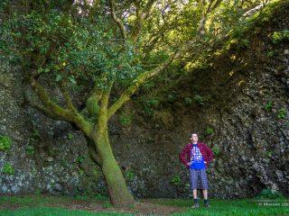 Священное дерево Гароэ