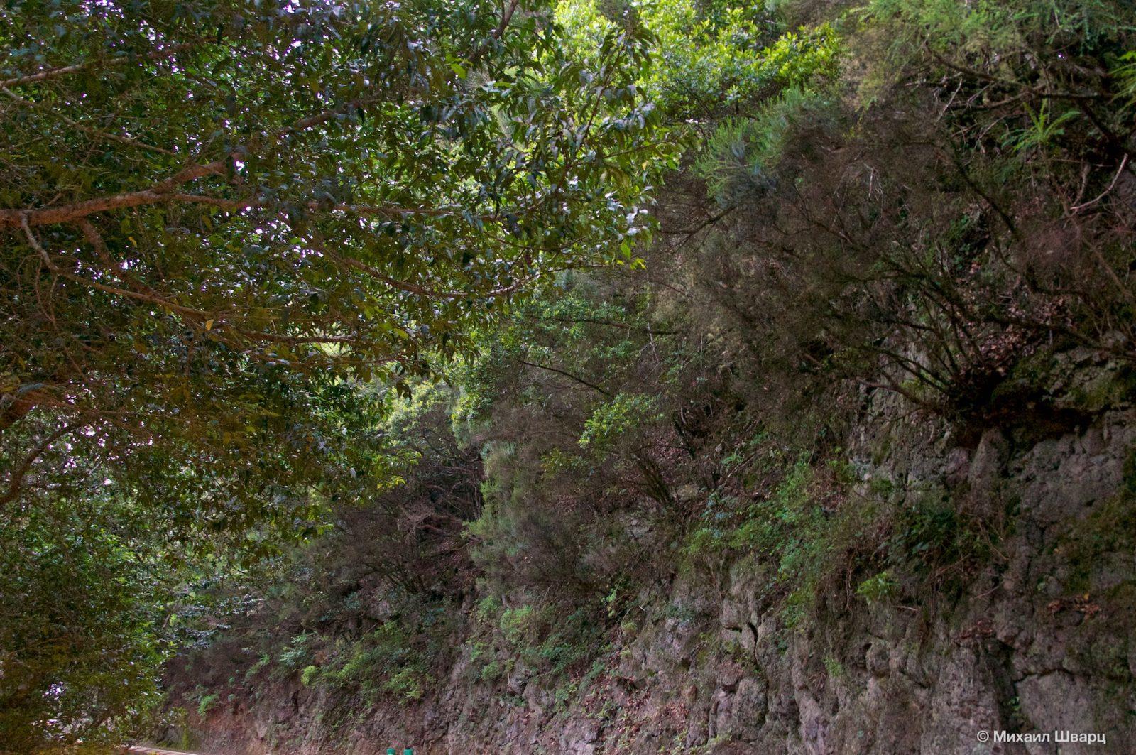Буйная растительность вдоль дороги