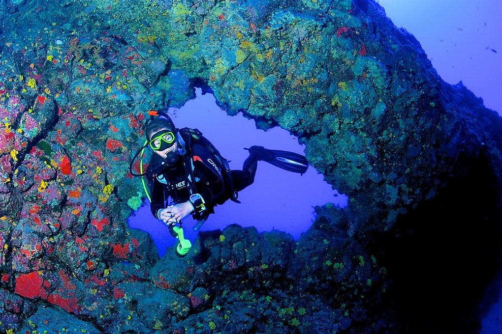 Подводные пейзажи (фото: Tony Gilbert)