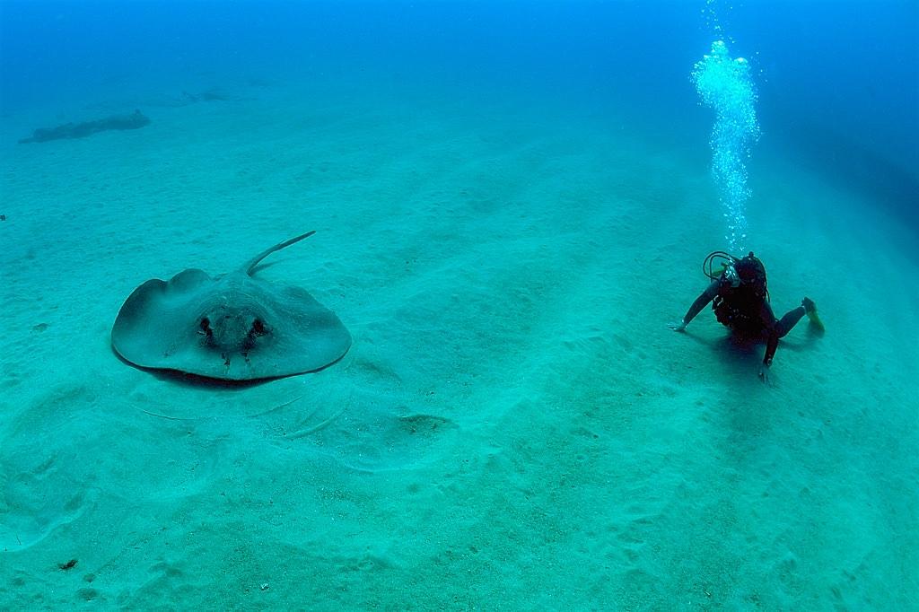 Подводный обитатель (фото: Tony Gilbert)