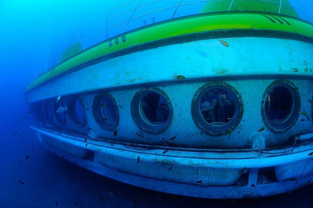 Иллюминаторы для разглядывания подводного мира (фото: Tony Gilbert)