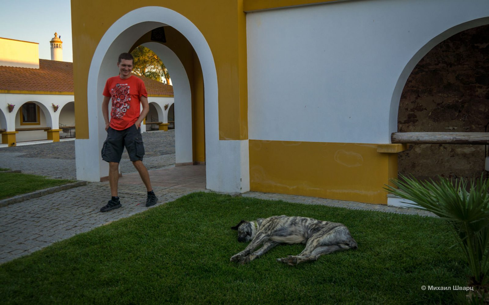 Вялая собака
