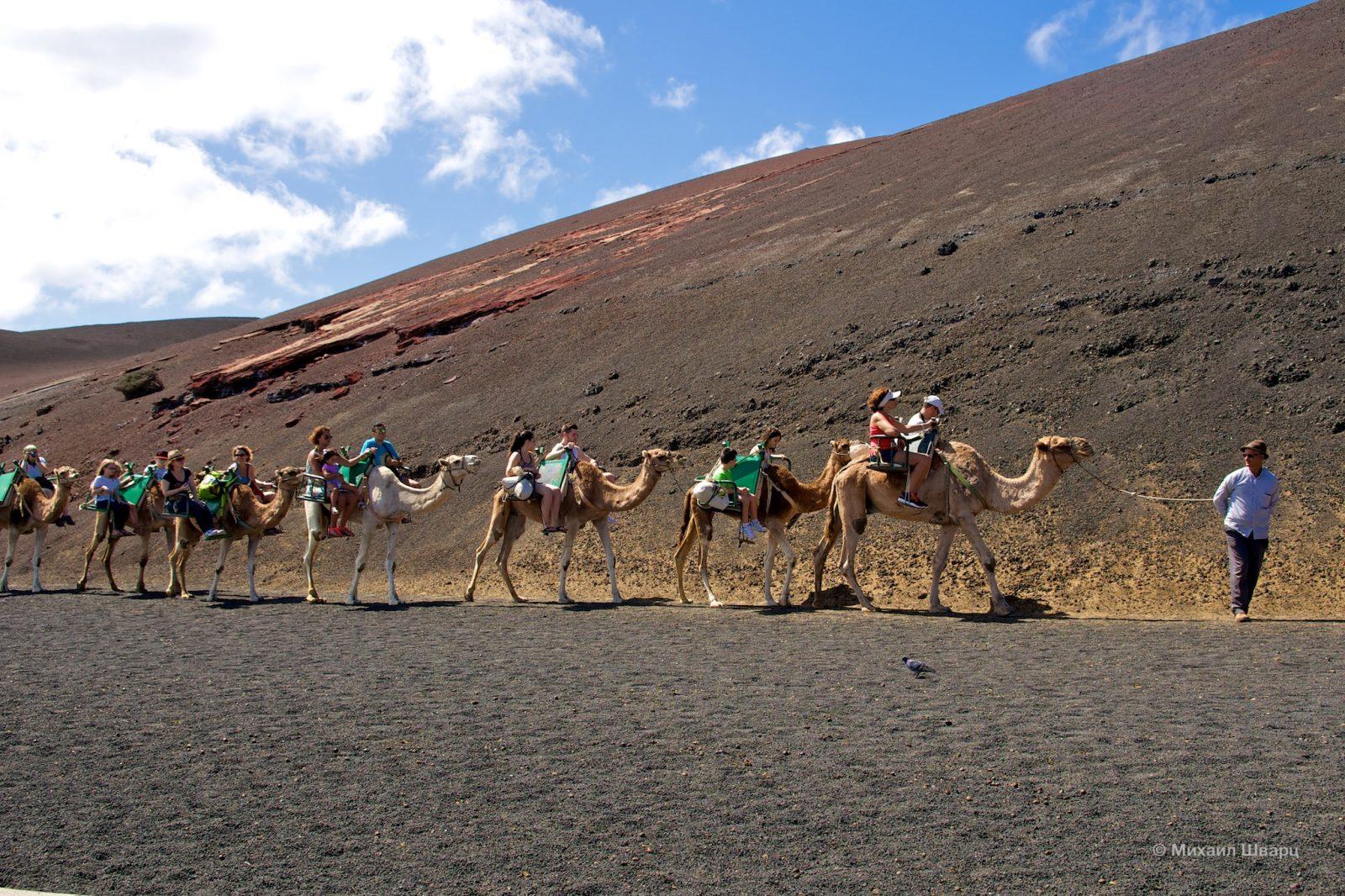 Катание на верблюдах среди вулканов в парке Тиманфая