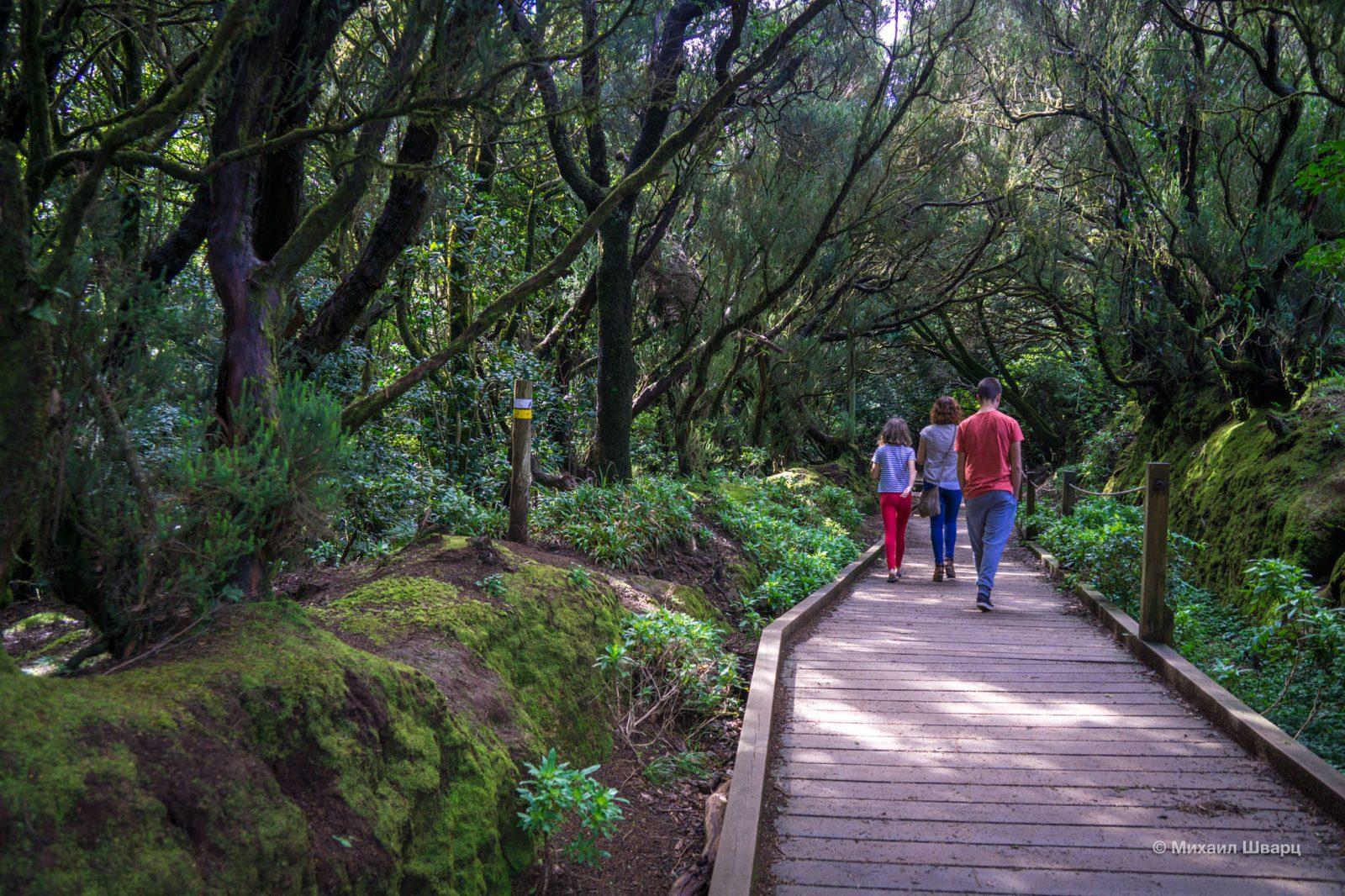 Отличный маршрут по лесу