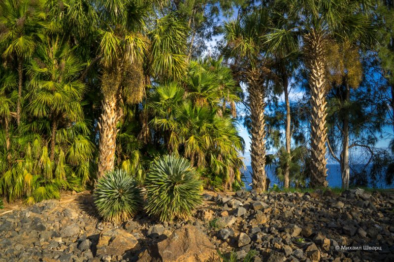 Ботанический сад Пальметум