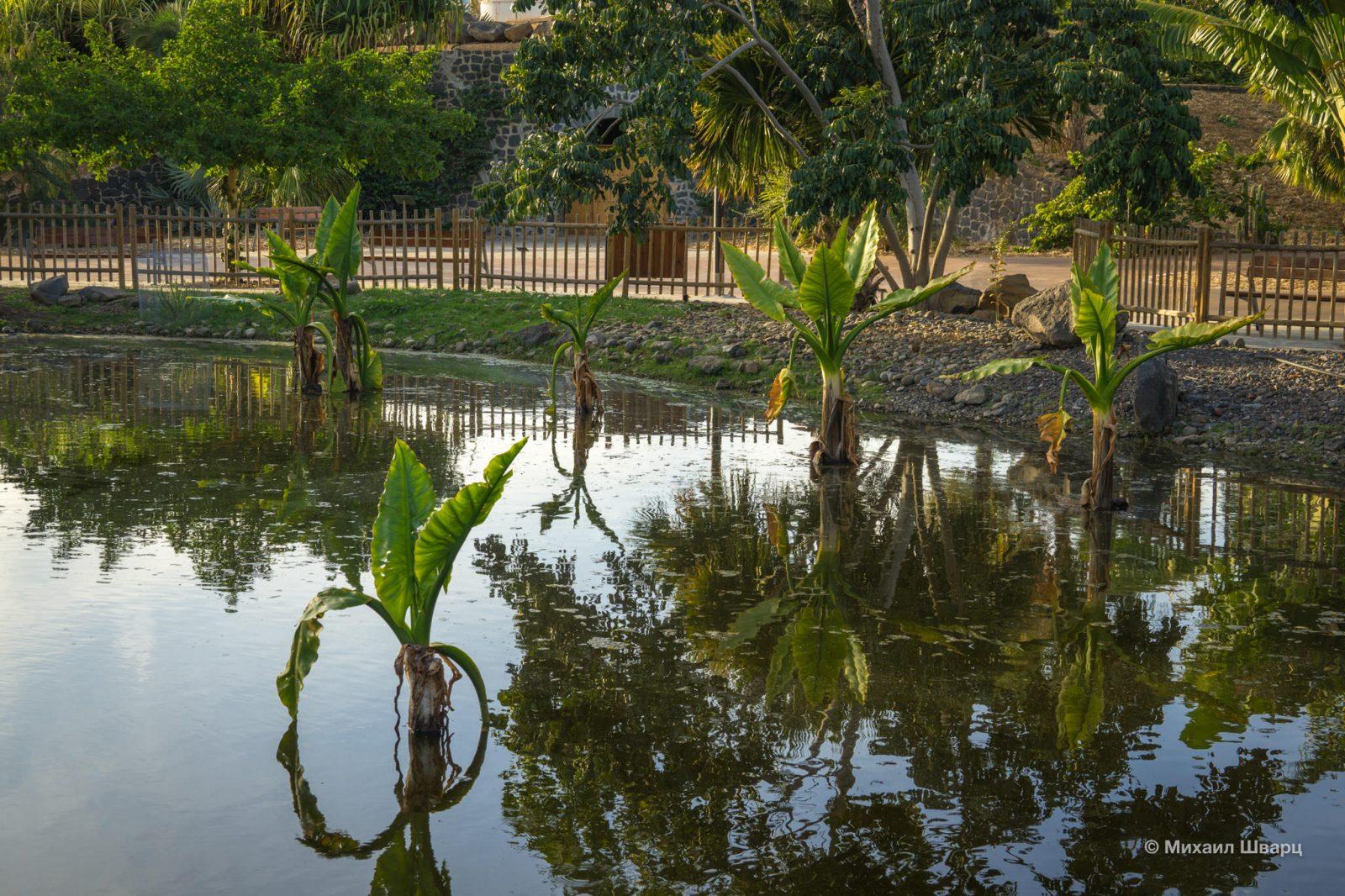 Пальмы в озере