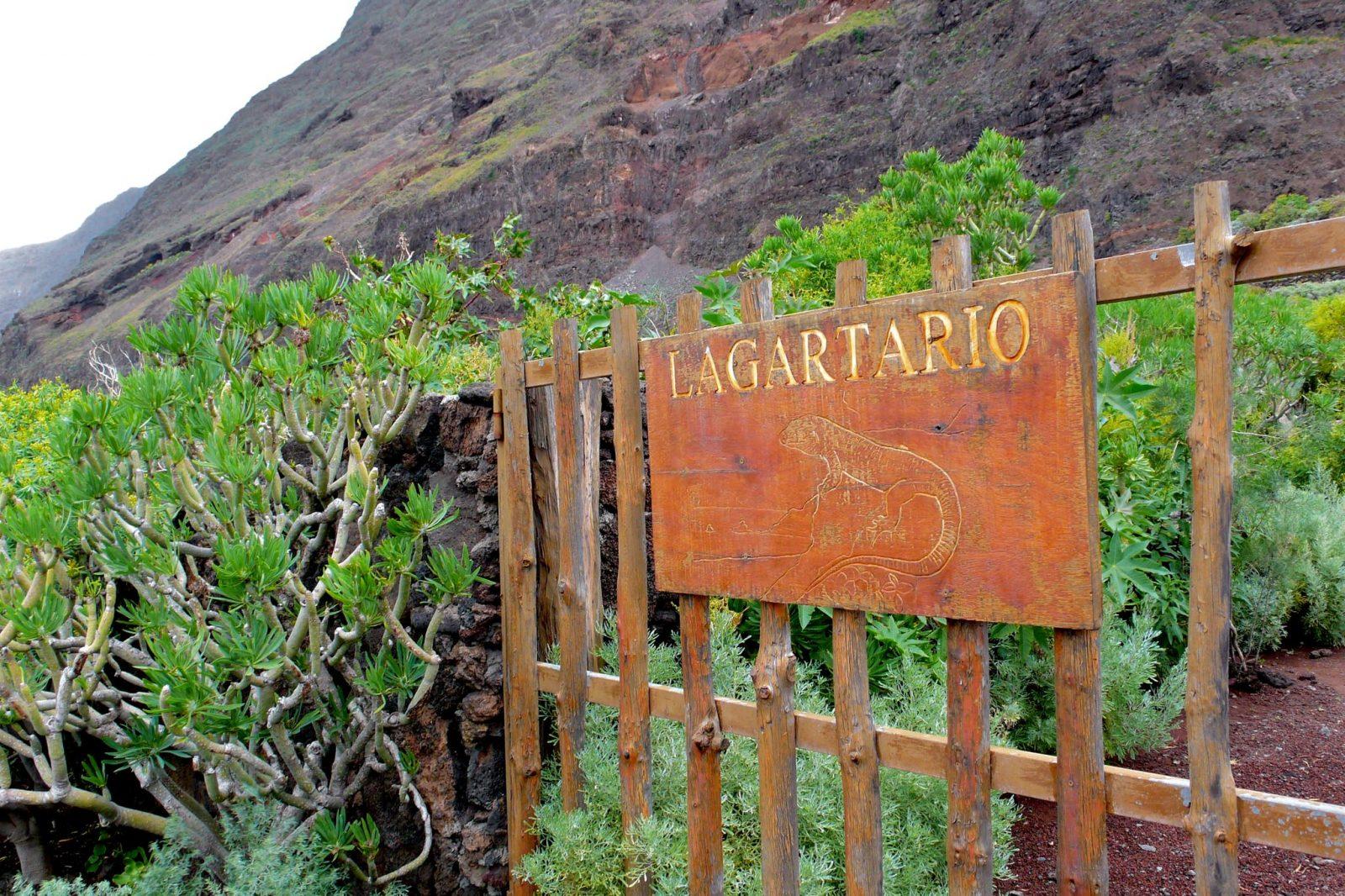 Центр восстановления популяции гигантской ящерицы Эль Йерро (фото: Jose Mesa)