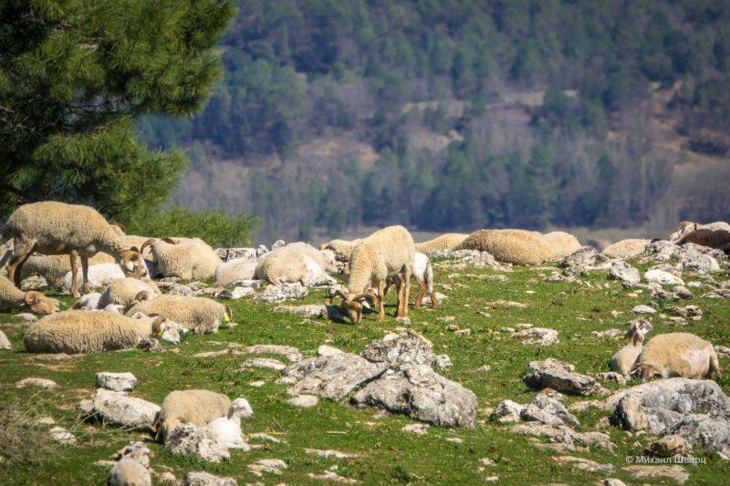 Парк Sierras de Cazorla во 2 раз 4