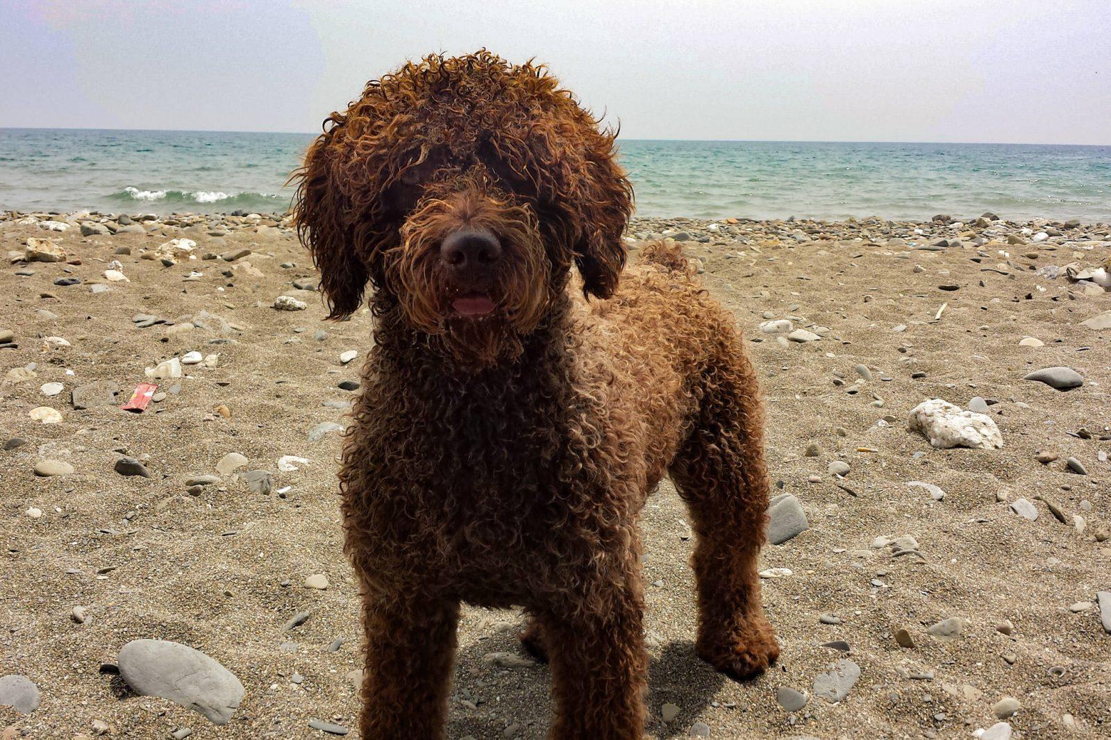 Пляж Собака Тоталан (фото: Graciela Repullo)