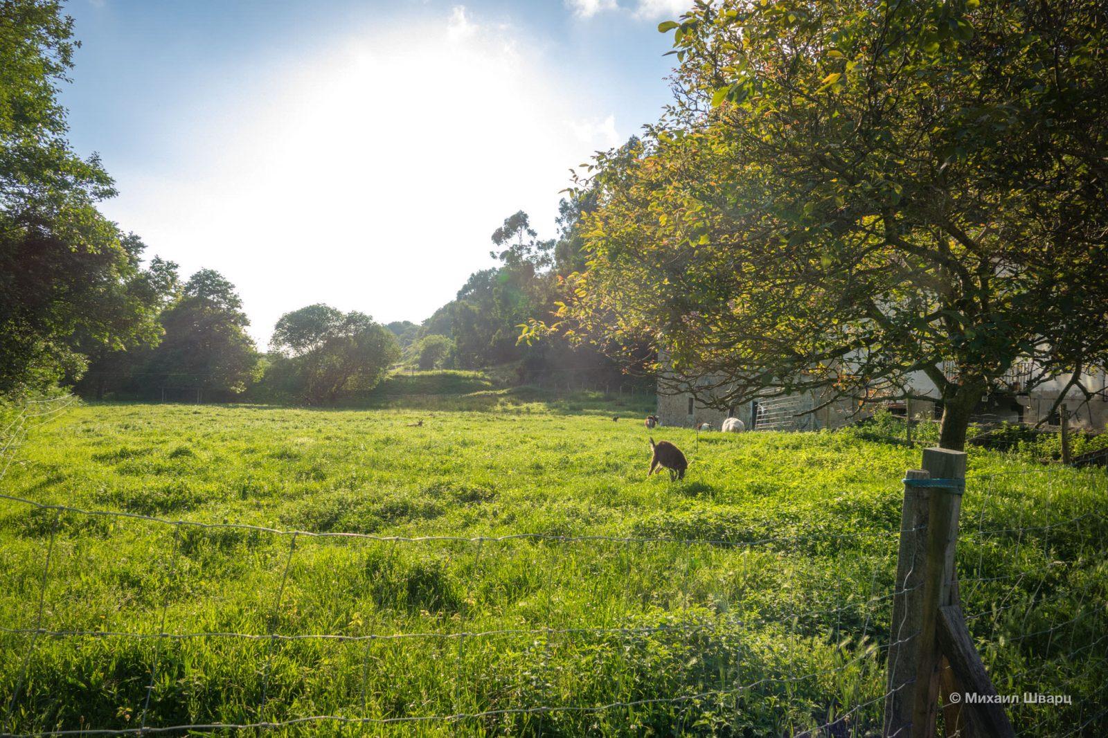Луга с козликами во дворе