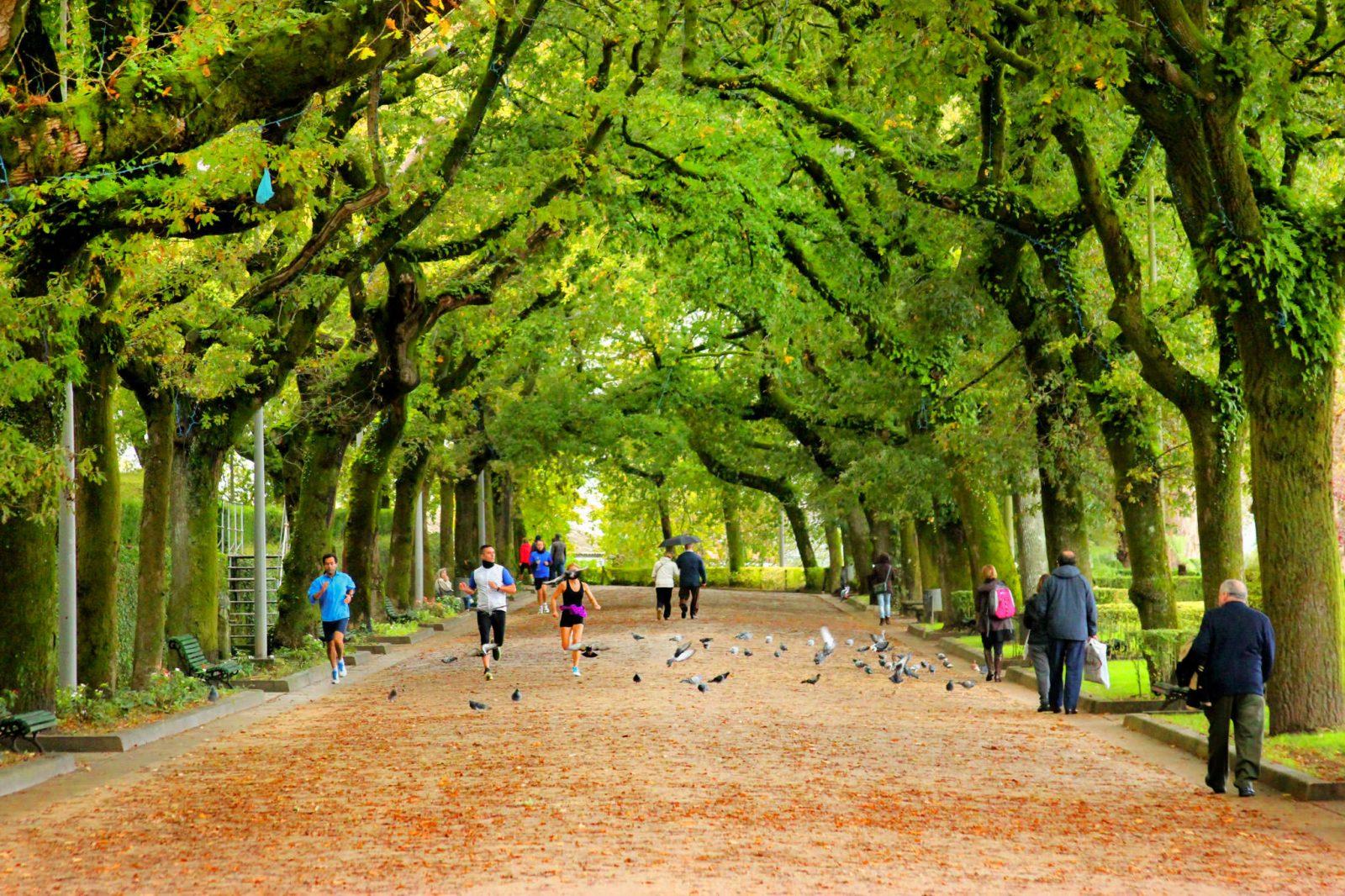 Аллея парка (фото: Ignacio Wolleter)