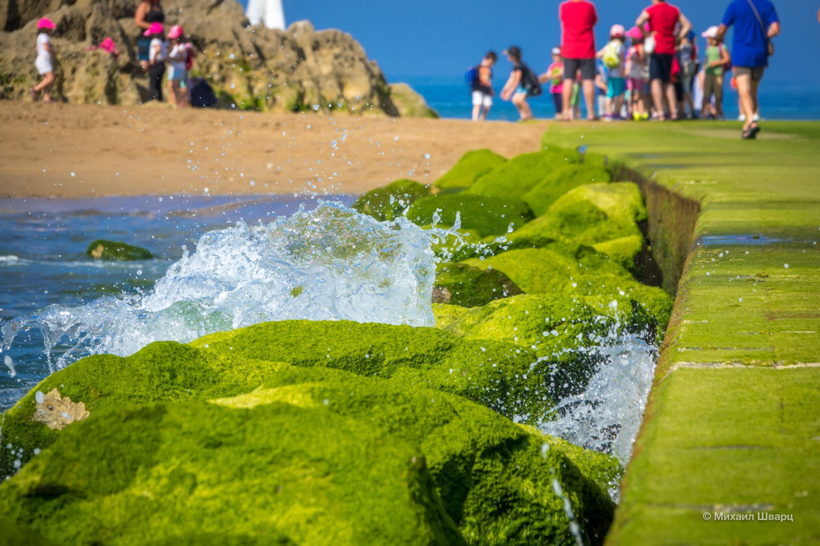 Зеленый ковер из водорослей на дорожке к острову
