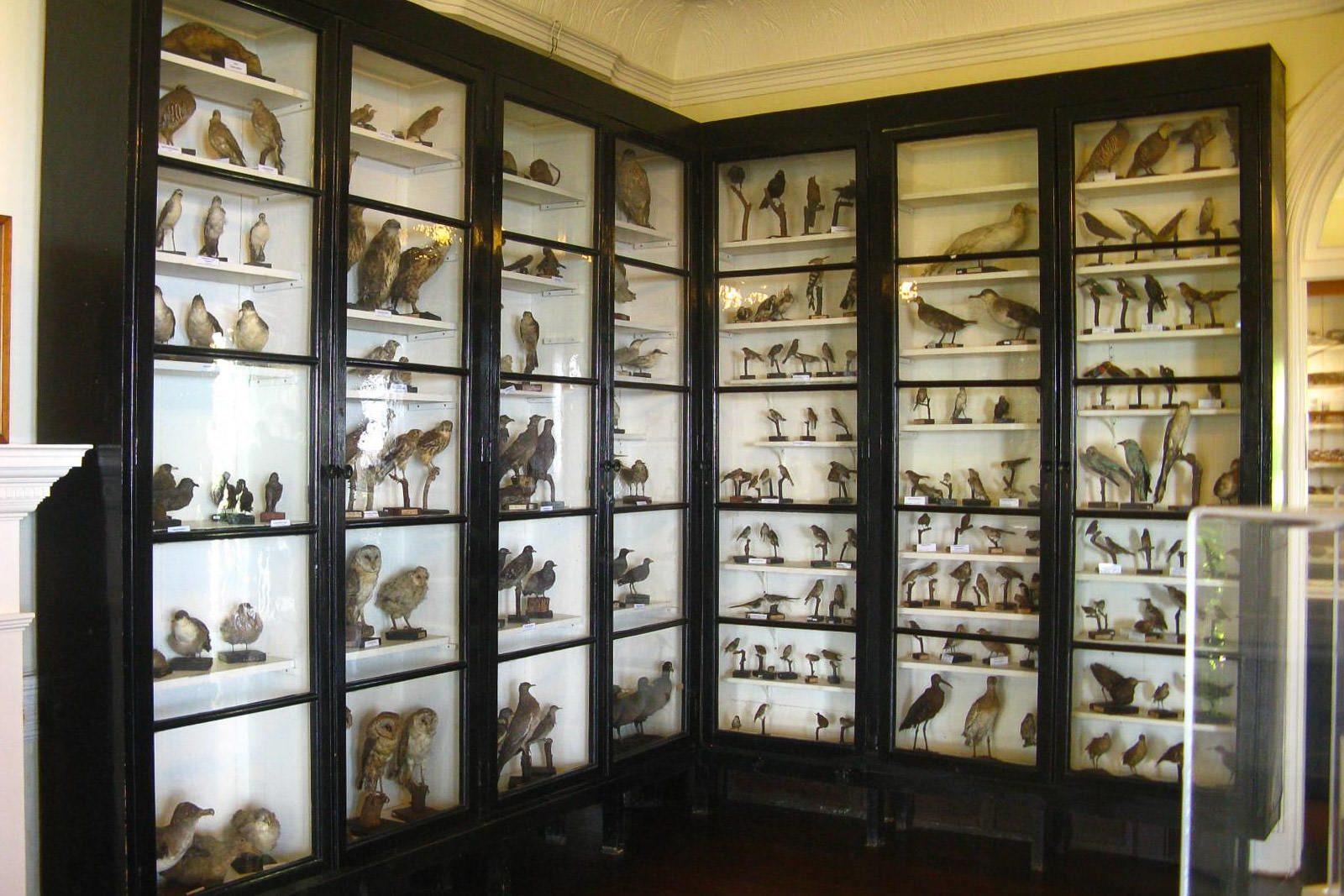 Музей естественной истории (фото: David Samuel Santos)
