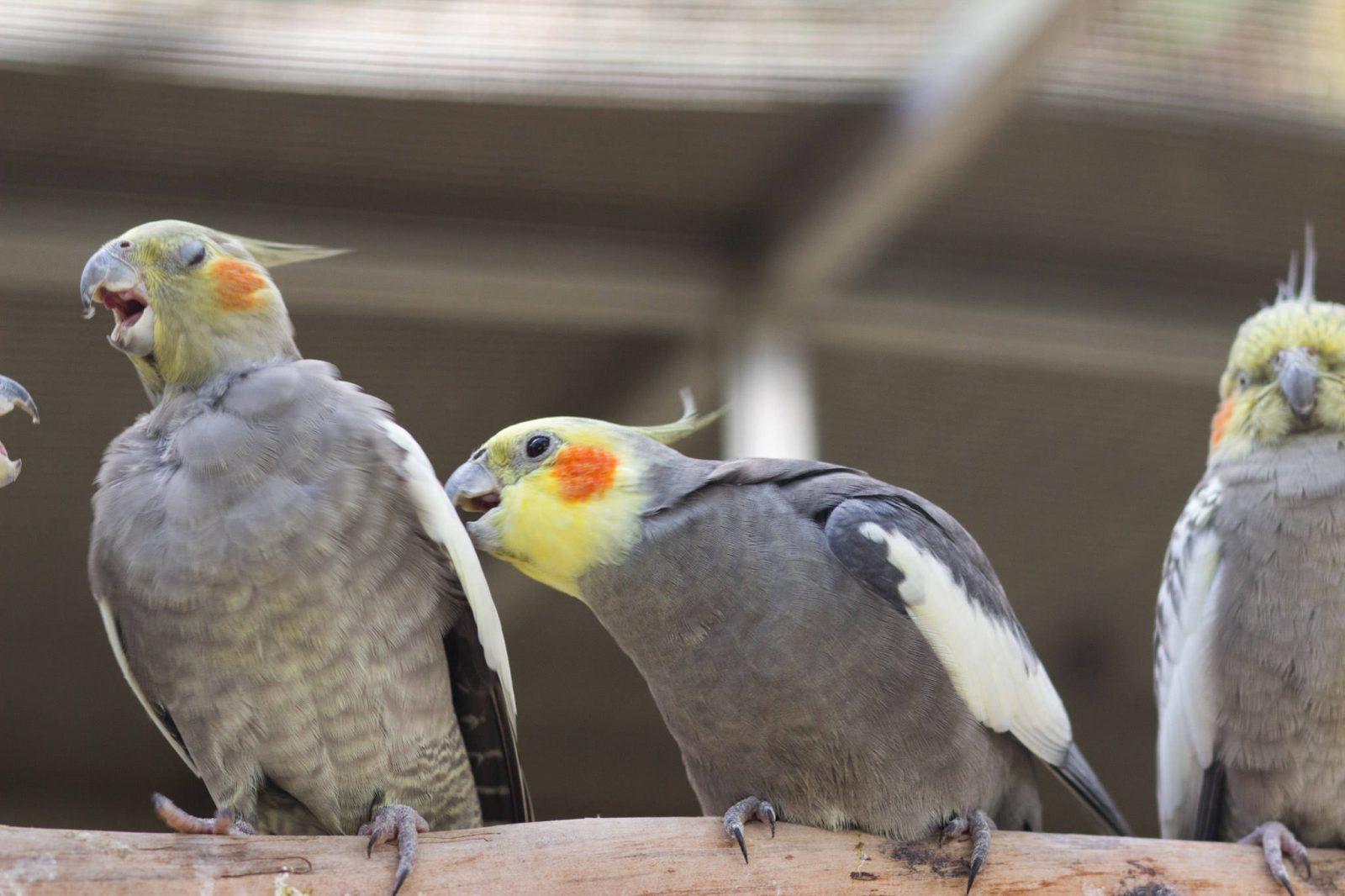 Сад попугаев (фото: Charlotte Murray)