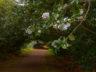Сады Палейру Феррейру 2