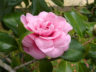 Сады Палейру Феррейру 3