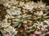 Ботанический сад Мадейры 6