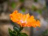 Ботанический сад Мадейры 11