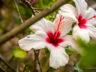 Ботанический сад Мадейры 12