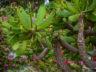 Ботанический сад Мадейры 9