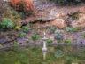Ботанический сад Мадейры 4