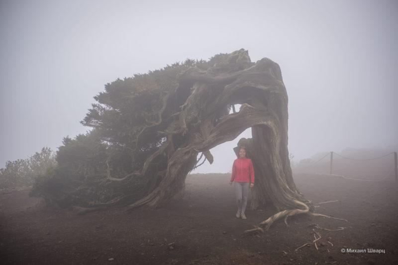 Неделя на острове El Hierro 32